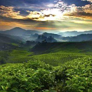 cropped-coffee-farm-ed.jpg